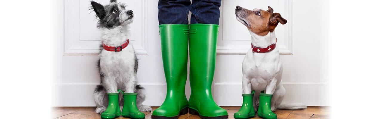 slider-dogs